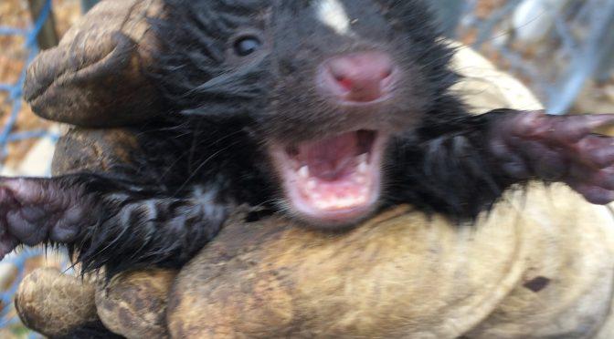 Business Animal Removal Wheaton