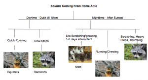 Diagnose Your Wildlife Problem - Noises in Attic