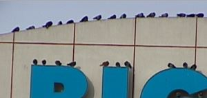 birds on big kmart