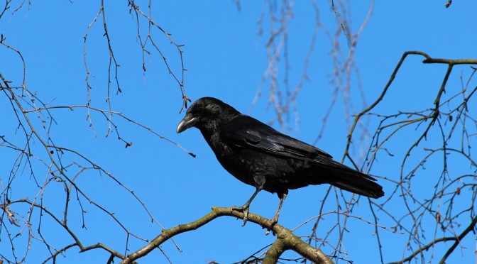 Bird Removal Barrington
