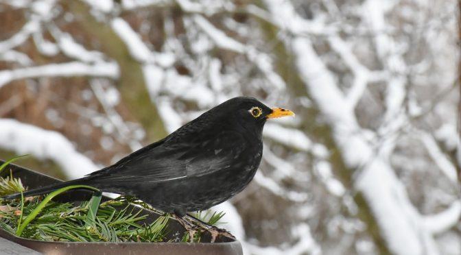 Winter Animal Preperation