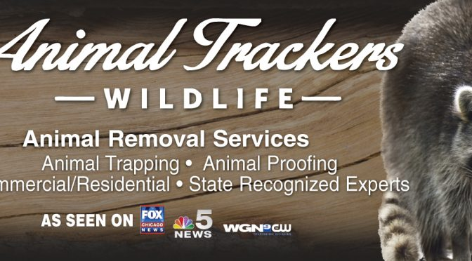 Animal Trackers Wildlife