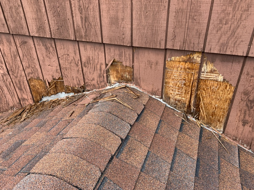 raccoon damage Downers Grove