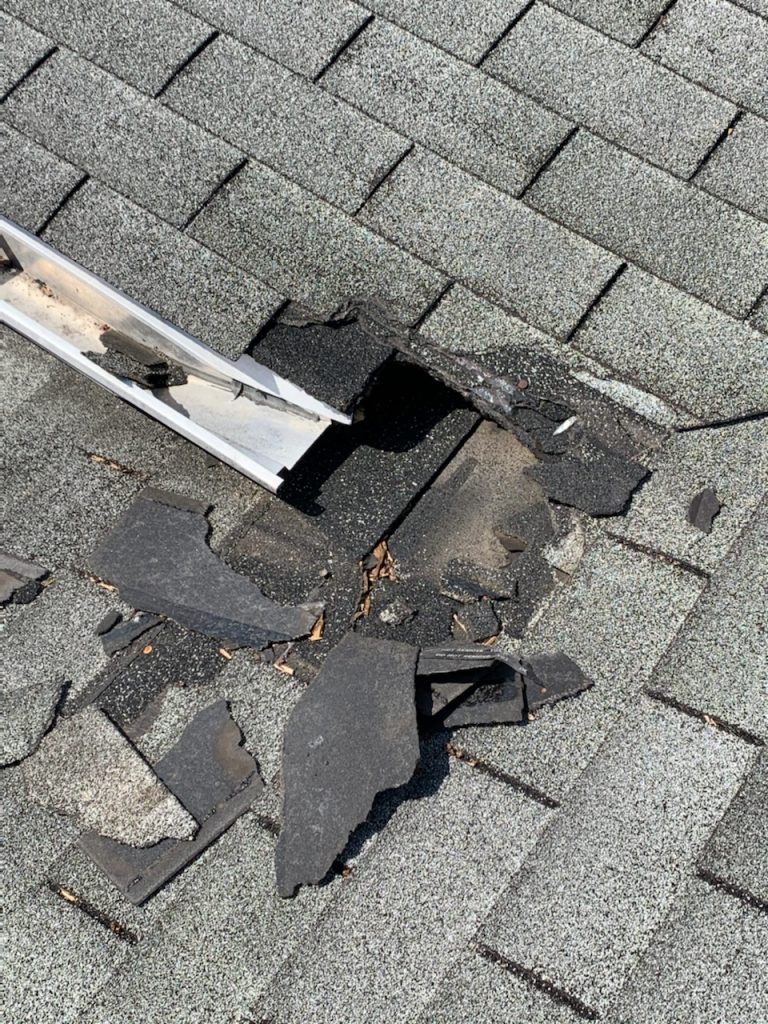 Raccoon Damage Wheaton